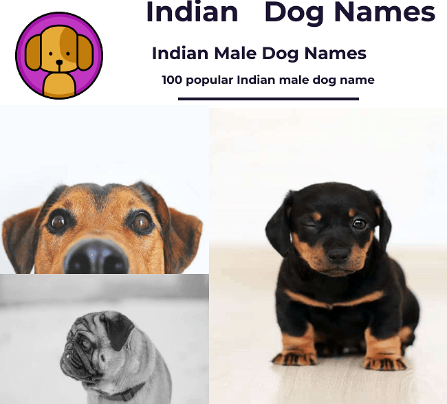 Dog names male Indian