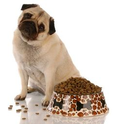 How much food should I feed my pug?