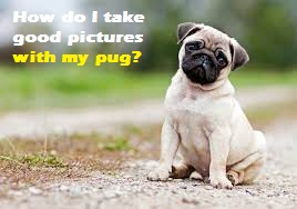 How do I take good pictures with my pug?