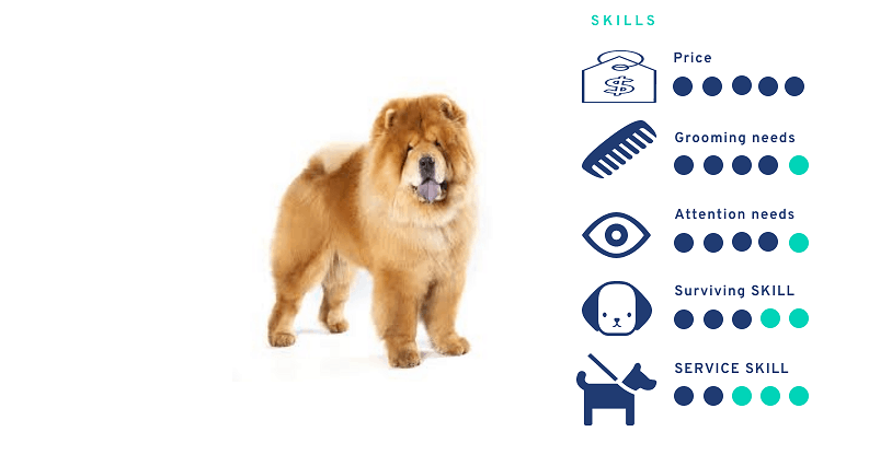 Chow Chow dog price in India