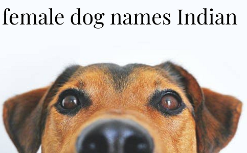 female dog names Indian