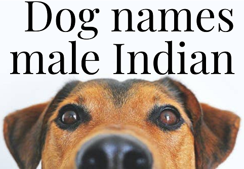 popular male dog names in India
