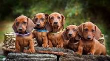 small dog breeds in India with price