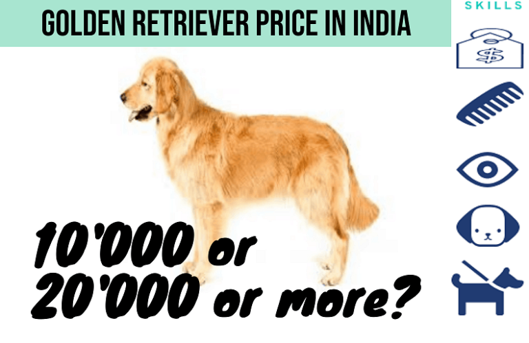 Golden Retriever Price In India – How Much would it cost in India