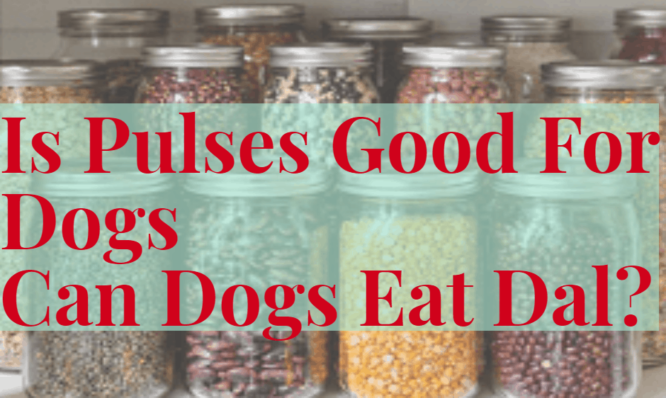 Can I give pulses to my dogs?