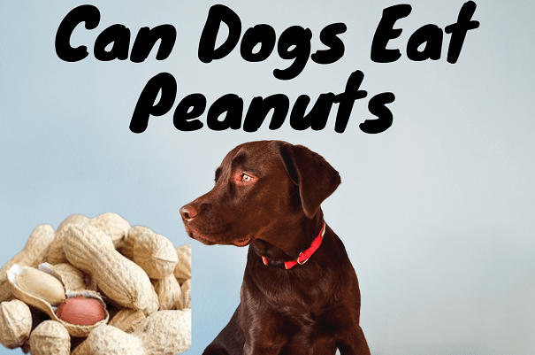 Is peanuts are safe for dogs