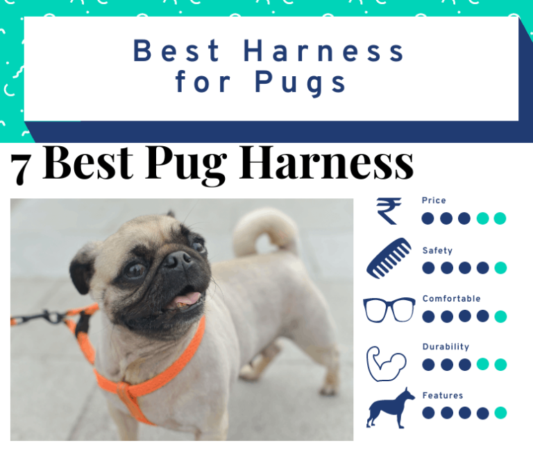 7 Best Harness for Pugs – Choose the Best Pug Harness in 2021