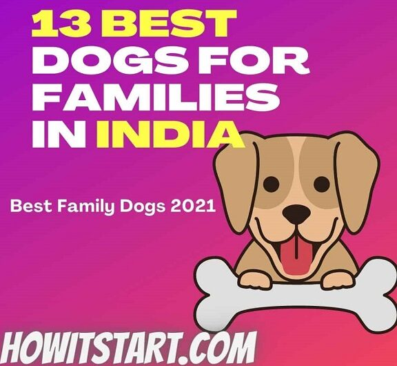 Best-Dogs-For-Families-in-India