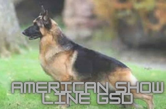 How much German Shepherd Puppy cost in India