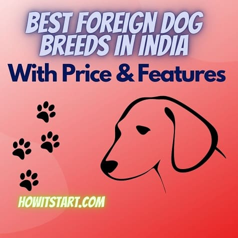 21 Best Foreign dog breeds in India – 2021 with prices