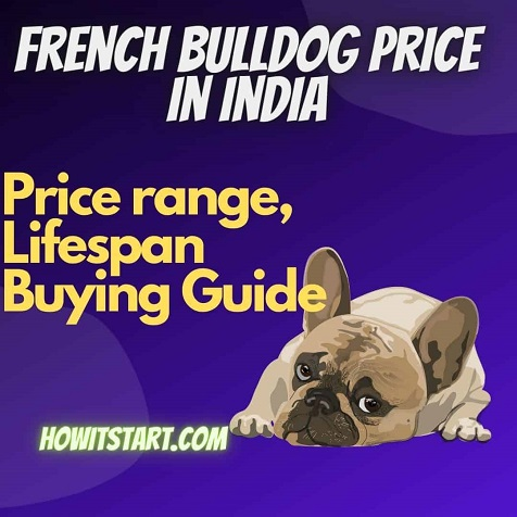 French Bulldog Price in India with prices in all major cities