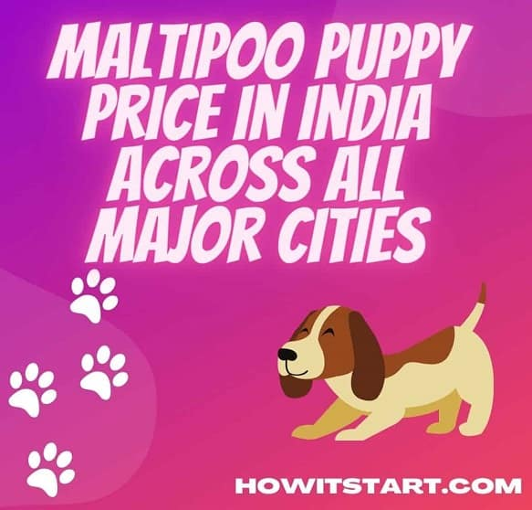 Maltipoo Puppy Price in India across all Major Cities 2021