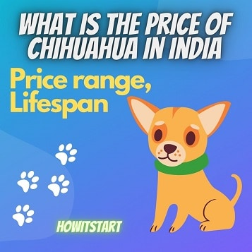 What is the price of Chihuahua in India – 2021
